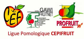 ligue pomologique cepifruit